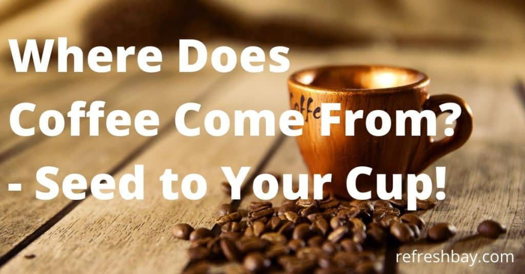 where does coffee come? from
