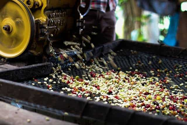 processing of coffee cherries