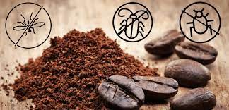Coffee grounds to repel Insects